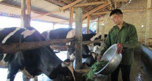 Hình ảnh Vì Sao Bò Cần Khoáng Chất - Vitamin? chính hãng tốt giá rẻ nhất tại DamiLama